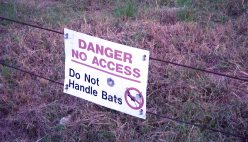 "a sign states: ""Do Not Handle Bats"""