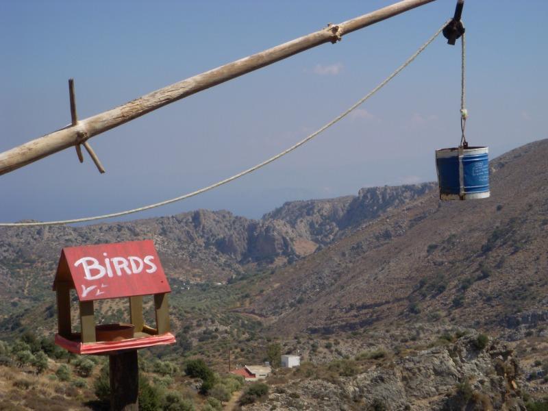 An unusual bird feeding station