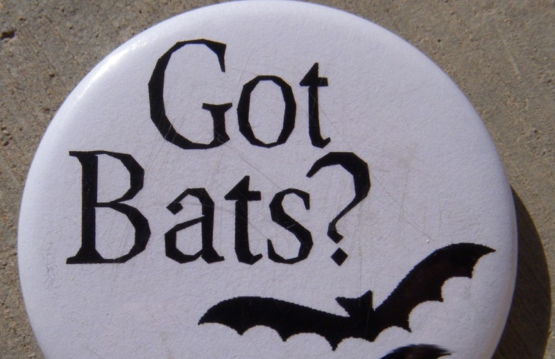 Got Bats? button