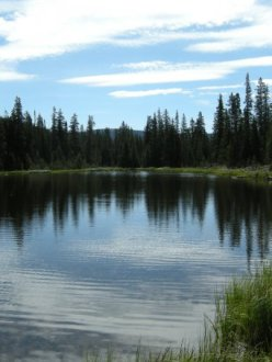 pristine lake surrounded by trees
