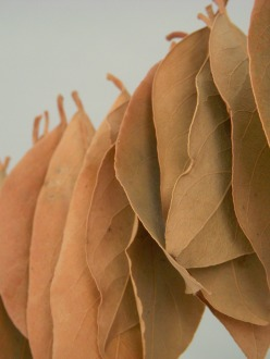 a row of dried leaves