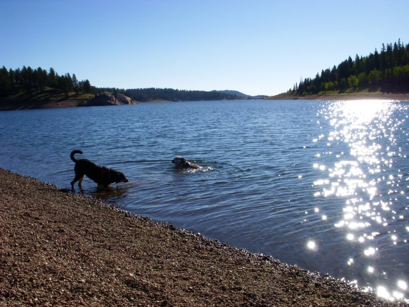 two dogs enjoying the water, one swimming and one drinking