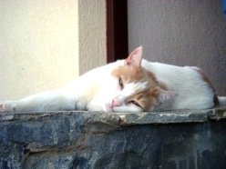 A cat lounging on a stair in Crete.
