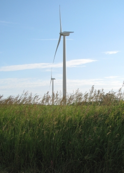 wind turbines in a grassy field