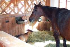 a horse and goat who live together at the Gut Aiderbichl animal sanctuary in Austria