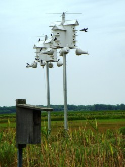 bird condo at the Montezuma National Wildlife Refuge, Seneca Falls, New York, 2012