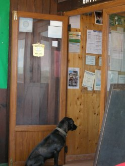 a dog looking longingly inside a restaurant door
