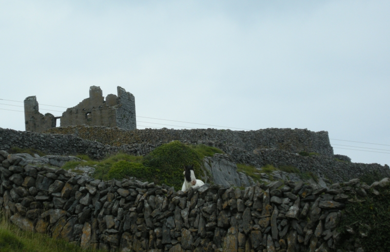 a castle and horse on the island of Inisheer