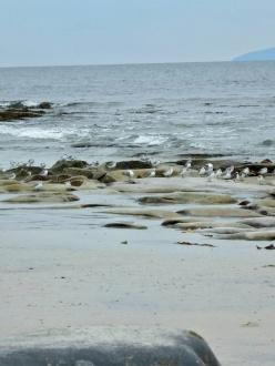 birds along the coast on Inisheer