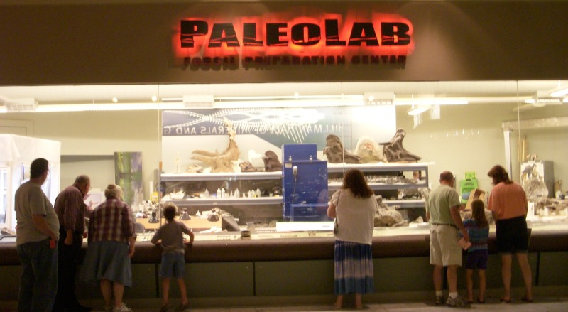 Paleolab at the Carnegie Museum of Natural History