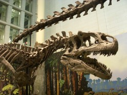Dinosaur at the Carnegie Museum of Natural History