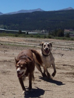 two dogs running in the sand with mountains in the background