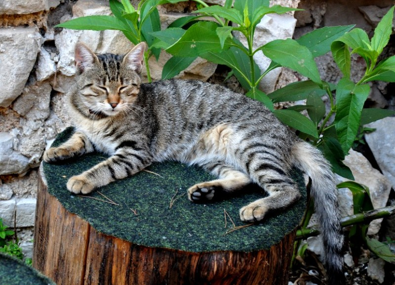 a cat snoozing on a stump