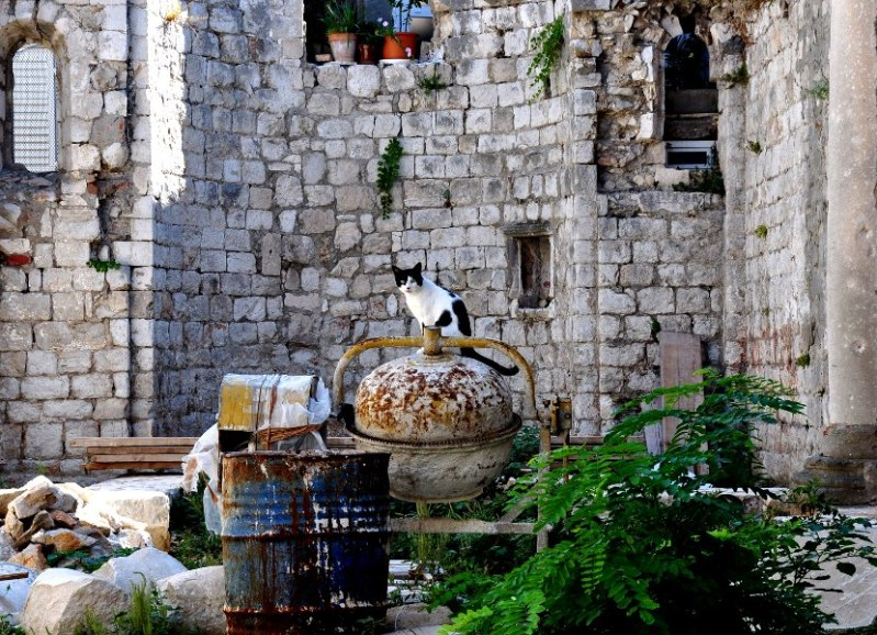 cat on a cement mixer in the middle of a construction site in Dubrovnik
