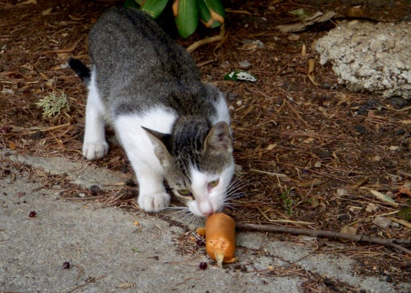 Someone who worked at a nearby hotel had a soft spot for stray cats. He or she would leave food items outside of the dumpster, and at any given time at least half a dozen cats gathered to eat. We saw them every day, at all times of the day and night. Finicky eaters? Not his bunch.