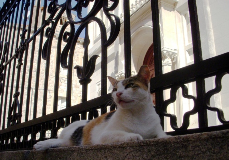 a cat reclining outside of a church in Dubrovnik