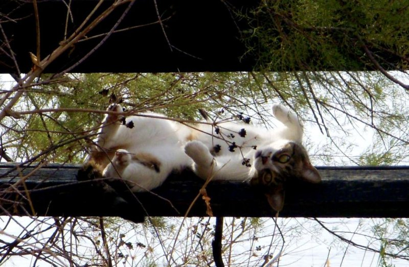 upside-down kitty hamming it up on a bench outside of Dubrovnik