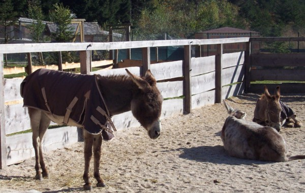 Donkeys at Gut Aiderbichl animal sanctuary near Salzburg, Austria.