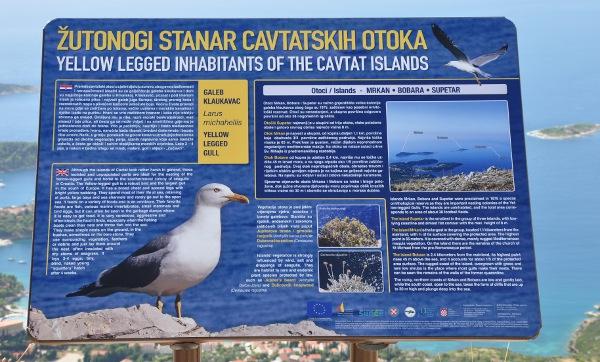 a sign describing the seagulls off Croatia's coast