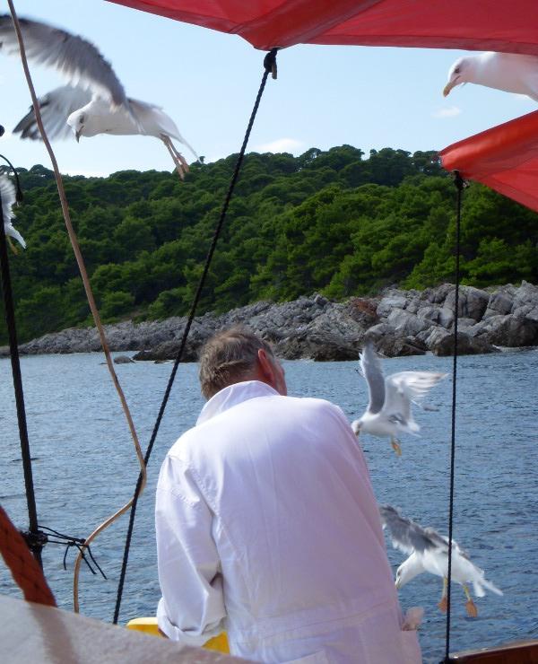 a boat captain feeds the seagulls off the coast of Croatia