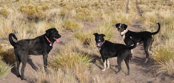 a trio of dogs
