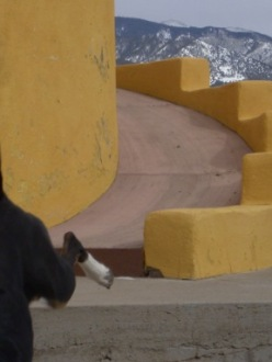 two dogs leap out of the camera frame, escaping the photograph