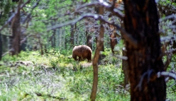 an image of a retreating bear's butt