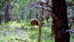 an image of a retreating bear's butt