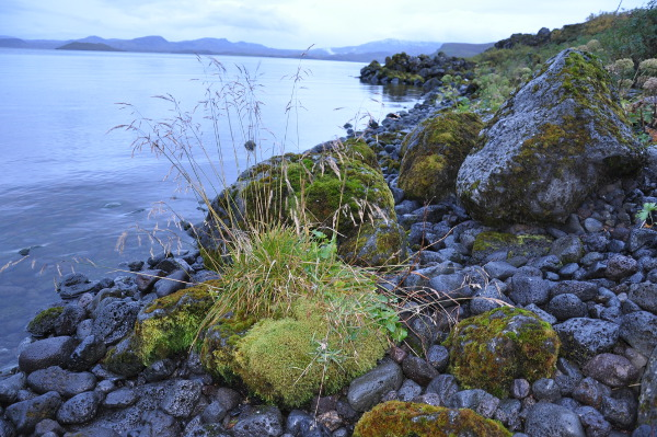 a view from the shore of Lake Thingvallavatn, Thingvellir National Park, Iceland