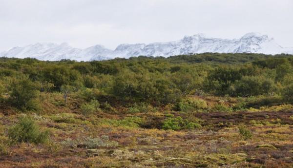 a snowy mountain in Thingvellir National Park, Iceland