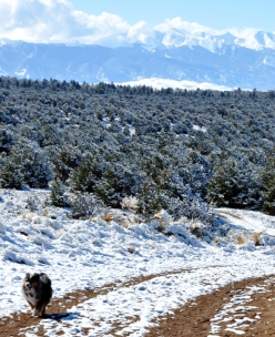a dog enjoys a hike in Colorado's San Luis Valley with Blanca Peak and Great Sand Dunes National Park in the background.