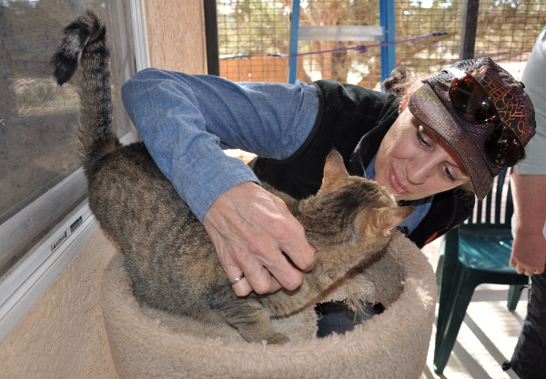making new friends at Best Friends cat community in Kanab, Utah