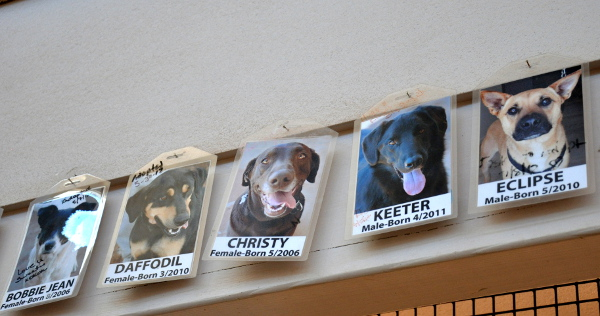 photos of adopted dogs at Best Friends Animal Sanctuary in Kanab, Utah