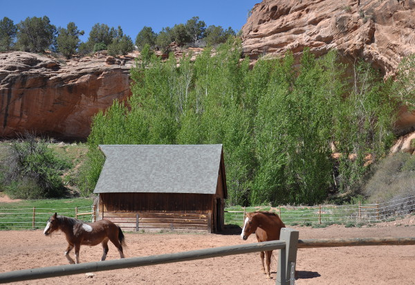 horse corral at Best Friends Animal Sanctuary in Kanab, Utah