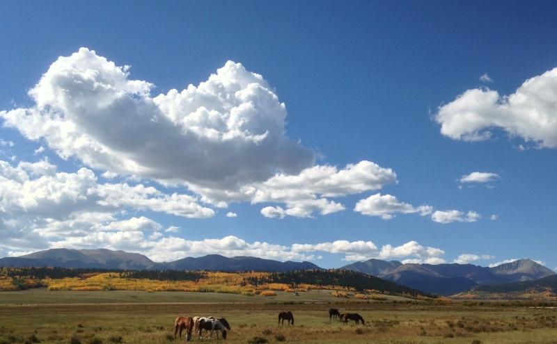 Colorado fall with horses